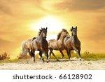 Stock photo horses in sunset 66128902