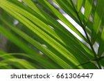 palm   Shutterstock . vector #661306447
