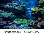 coral reef | Shutterstock . vector #661340197
