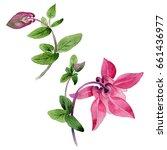 wildflower aquilegia flower in... | Shutterstock . vector #661436977