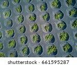 aerial scenic view of wine... | Shutterstock . vector #661595287