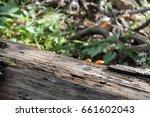 Rotting Log With Orange...