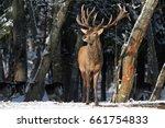belarus. winter wildlife... | Shutterstock . vector #661754833