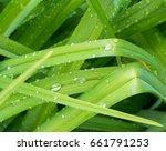 closeup nature view of green... | Shutterstock . vector #661791253