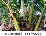 coconut tree | Shutterstock . vector #661792093