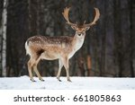 fallow deer buck. majestic... | Shutterstock . vector #661805863
