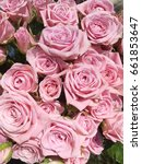 pink shabby roses. small pink...   Shutterstock . vector #661853647