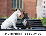 two bull terrier dogs sitting... | Shutterstock . vector #661869403