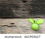 green lime placed on the wooden ... | Shutterstock . vector #661903627