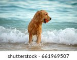 dog playing ball at the beach | Shutterstock . vector #661969507