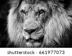 Small photo of Ferocious stare of a powerful male African lion in black and white