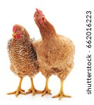 young brown chickens on a white ... | Shutterstock . vector #662016223