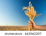 Small photo of the man holding the ripened gold cones of wheat on blue sky and wheat field background. empty space for the text. , agriculture, agronomics, food, production, organic, harvest concept.