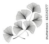 ginkgo biloba leaves | Shutterstock .eps vector #662142577