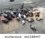 feeding pigeon on the road side ... | Shutterstock . vector #662188447
