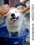 Small photo of Happy smiling dog being washed and bathed in a blue water tub, joyful animal concept