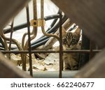 Stock photo scared and timid stray kitten in the streets 662240677