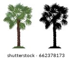 tropical palm tree with green... | Shutterstock . vector #662378173