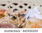 close up of fly are eating... | Shutterstock . vector #662426203
