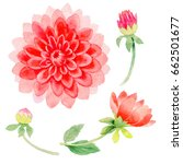 wildflower dahlia flower in a... | Shutterstock . vector #662501677