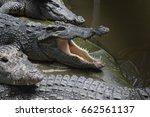 crocodile hunter of the water | Shutterstock . vector #662561137