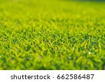 grass field background  | Shutterstock . vector #662586487