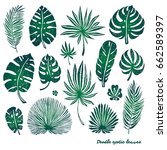 set of green doodle exotic palm ... | Shutterstock .eps vector #662589397