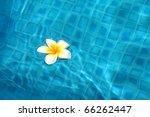 White Flower Floating On The...