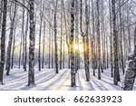 beautiful landscape with birch... | Shutterstock . vector #662633923