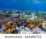 underwater landscape with coral ... | Shutterstock . vector #662686723