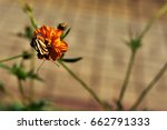 Tiger Butterfly On Flower In...