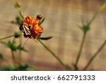 Tiger Butterfly On Flower In...