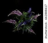 lupine flowers on a black... | Shutterstock . vector #662888617