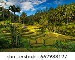 tegallalang rice fields. ubud   ... | Shutterstock . vector #662988127