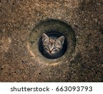 Small Cat In A Hole