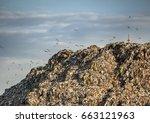 ecology concept. dump and birds | Shutterstock . vector #663121963