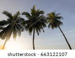 coconut palm trees at sunset | Shutterstock . vector #663122107