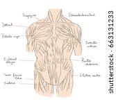 hand drawn illustration of the... | Shutterstock .eps vector #663131233