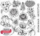 vector collection of hand drawn ... | Shutterstock .eps vector #663137143