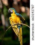 colourful parrots bird sitting... | Shutterstock . vector #663192787