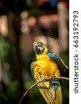 colourful parrots bird sitting... | Shutterstock . vector #663192793