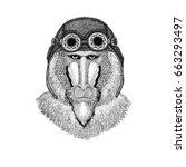 monkey  baboon  dog ape  ape... | Shutterstock . vector #663293497