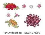 hand drawn sakura  peony flower ... | Shutterstock .eps vector #663427693