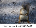 Close Up Of A Squirrel With...