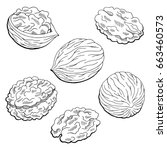 walnut graphic black white... | Shutterstock .eps vector #663460573