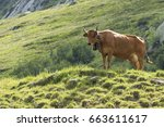 France Cattle Filed