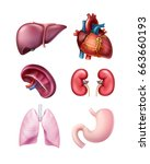 vector set of healthy realistic ... | Shutterstock .eps vector #663660193
