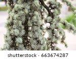 Small photo of Pine tree (Pinopsida).