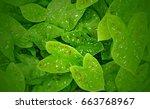 green leaf texture. leaf... | Shutterstock . vector #663768967