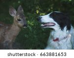 Curious Dog And Roe Deer Fawn...